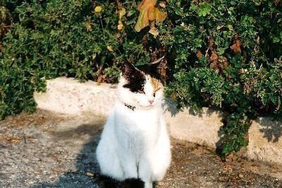 1995_cat.jpg