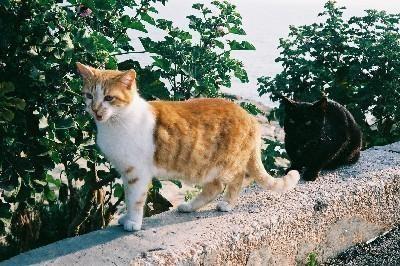 1995_cats2.jpg