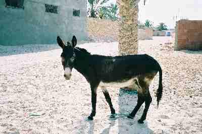 1997-01_donkey.jpg