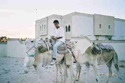1997-01_white_camels.JPG