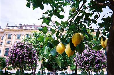 2003_KronprinzGarden_Lemon