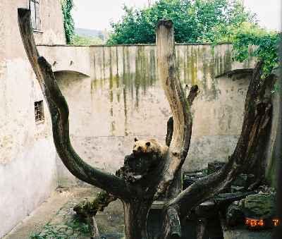 2004_CeskyKrumlov_Bear01