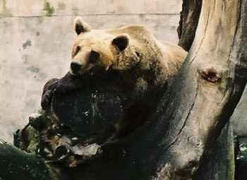2004_CeskyKrumlov_Bear01zoom
