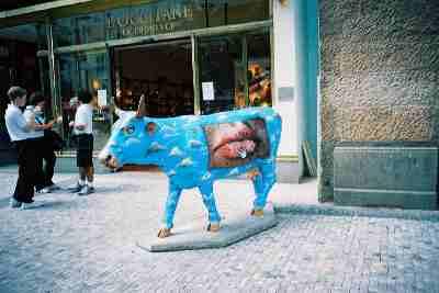 2004praha_cow1.JPG